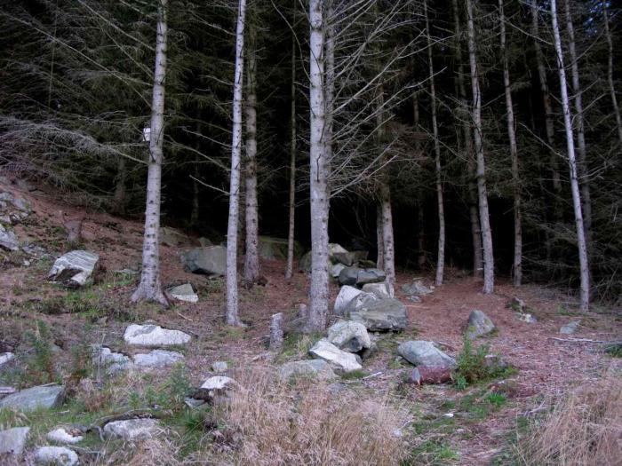 Robyn - Forest