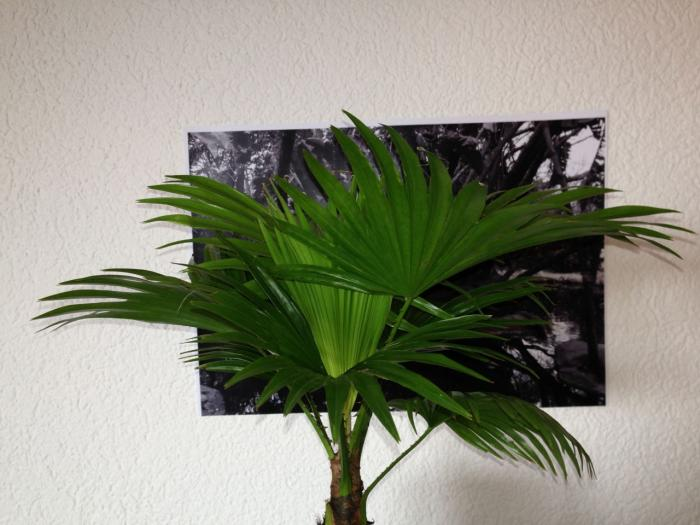 Palm Collage - Bern Studio
