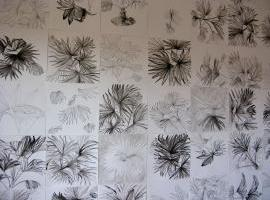 Palm Drawings 2013